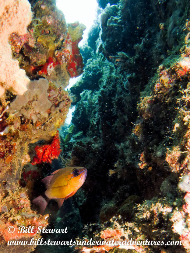 Diving Subic Bay-Part Two