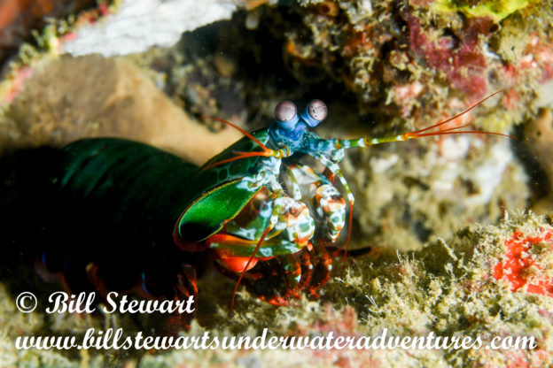 diving – Bill Stewart's Underwater Adventures